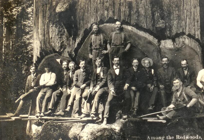Photo of redwood logging